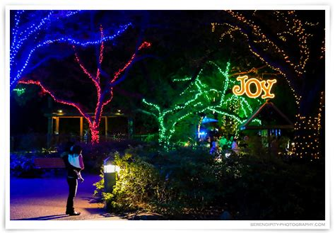 Houston Zoo Lights With Lauren 187 Serendipity Photography Lights At Houston Zoo