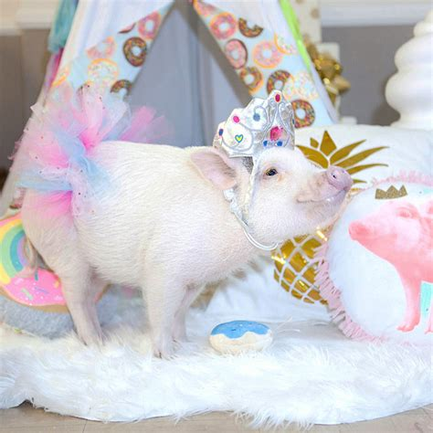 Cmon Ladiesbe Pigs by Micropig At Birthday