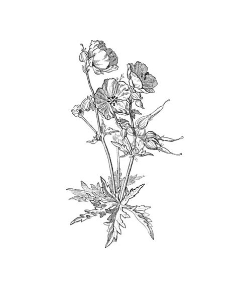 geranium tattoo designs geranium www imgkid the image kid has it