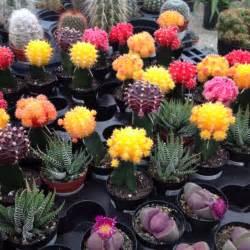 Flowers Growing In Water - diversos tipos de cactus los de colores son mutaciones