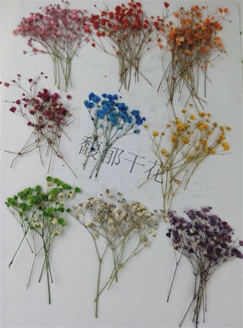 shipping pressed flower pcs color dye absorption