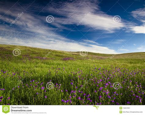 meadow green color green meadow stock image image of color meadow green