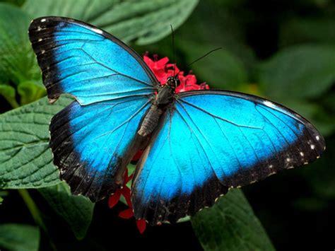 Comment Attirer L Argent Dans Sa Maison by Comment Attirer Les Papillons Dans Jardin