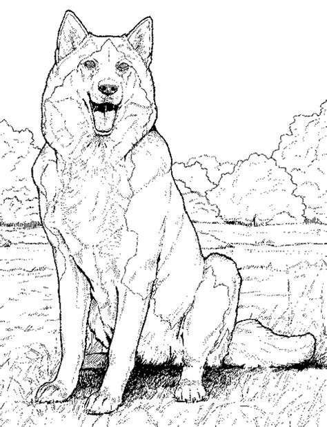 coloring pages of realistic dogs husky coloring pages free printable coloring pages for