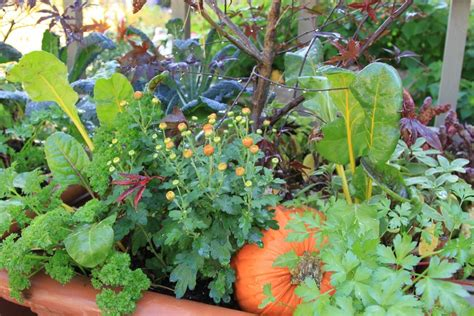 Edible Garden Plants by Veggies Herbs And Flowers How To Mix Edible Plants In