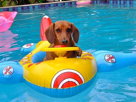 pool rafts for dogs 17 best images about in the water on pool floats boats and