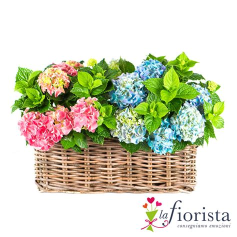 fiori da spedire consegna fiori a domicilio spedire fiori consegna