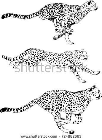 Running Cheetah Outline by Running Cheetah Ink On White Stock Vector 699421114