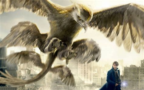 where to find wallpaper fantastic beasts and where to find them eagle wallpaper