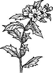 Tembakau Rawing 多年生草本植物剪貼畫 下載52個clip arts 第1頁 clipartlogo