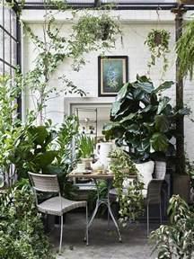 room plants best 25 plant rooms ideas on pinterest conservatory