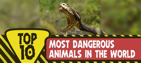 What Is The Most Dangerous To Detox From by Top 10 Most Dangerous Animals In The World Top Ten