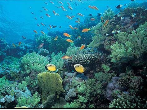 imagenes de hábitats naturales ecosistemas acu 225 ticos c 243 mo hacer un ensayo bien
