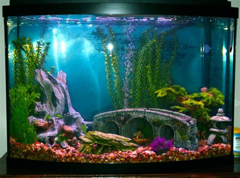 Decorating Ideas For Fish Tank Decor For Fish Tanks Aquarium Aquarium Design Ideas
