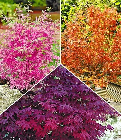 Pflanzen Garten Bestellen by 25 B 228 Sta Pflanzen Bestellen Id 233 Erna P 229 Garten