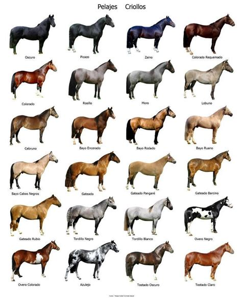 color of horses 29 best breed chart images on