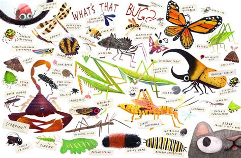 backyard insects some bugs angela diterlizzi