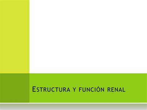 estructura y funci 243 n renal