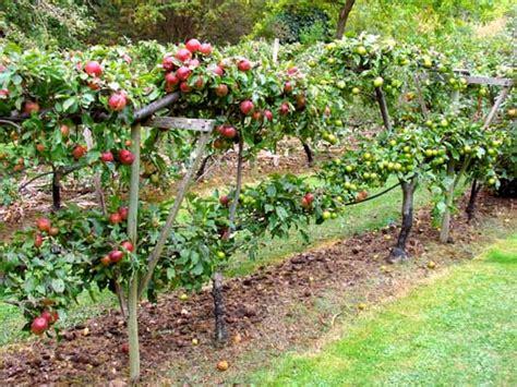 pragmatic sustainability backyard inspiration