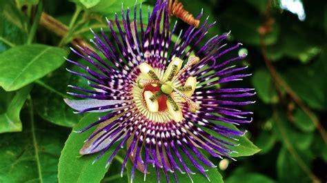 wallpaper hd widescreen high quality desktop flower hd flowers wallpapers widescreen wallpaper directory