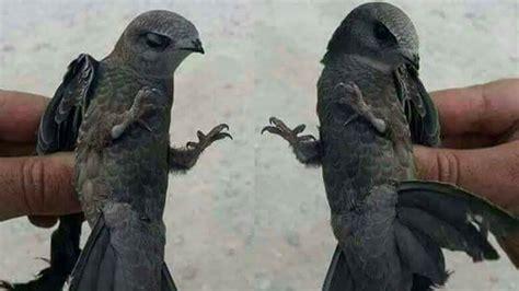 viral penampakan burung ababil hewan perkasa