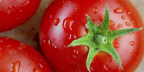 eating tomatoes cuts heart disease risk by a quarter cooked tomatoes may cut heart disease risk health news