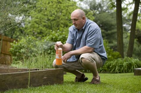 homemade natural remedies   vegetable garden