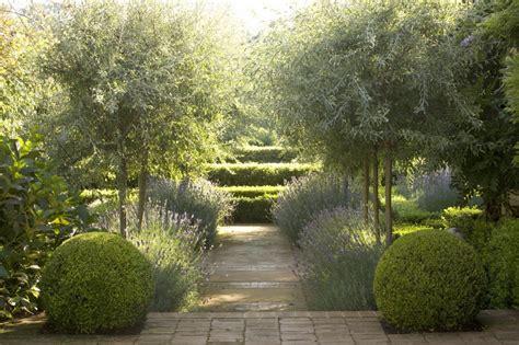 alley garden by fudge landscapes boxwoods garden designer visit lavender fields in australia