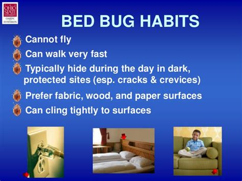 where do bed bugs hide during the day bedbug101slideshow
