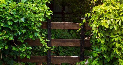 piante tappezzanti fiorite piante da giardino sempreverdi e fiorite quali scegliere