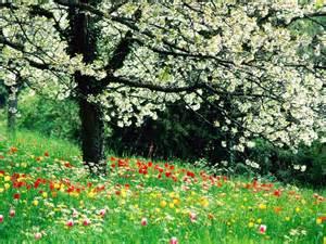 Beautiful Spring by Beautiful Spring Flowers Hd Wallpaper Flowers Wallpapers
