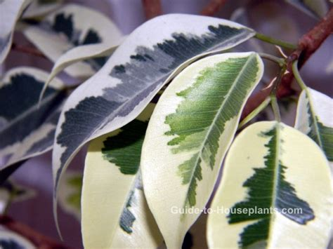 common house plants  pictures