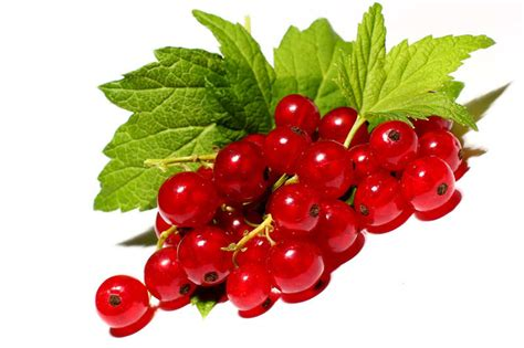are grapes safe for dogs 8 fruits and vegetables that are not safe for dogs