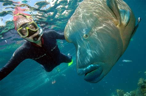 best place to dive the great barrier reef hairstyles great barrier reef is the site for