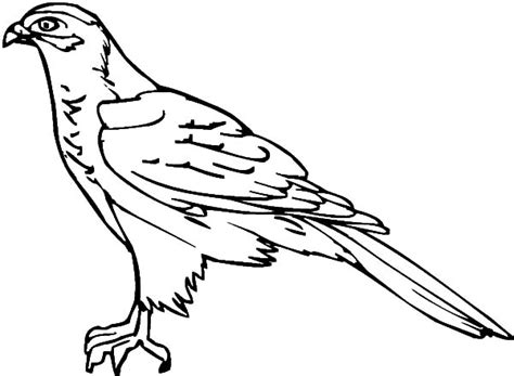 coloring page falcon bird falcon bird outline coloring pages netart