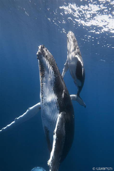 imagenes sorprendentes de ballenas 20 majestuosas fotos de ballenas para celebrar el d 237 a