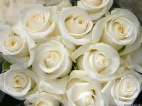 Aisle Runner For Wedding White Rose Flower Bouquet Wallpaper Hd Wallpaper June Pinterest White Roses And Flowers