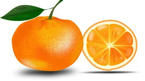 imagenes png frutas vector gratis orange frutas jugosas c 237 tricos imagen