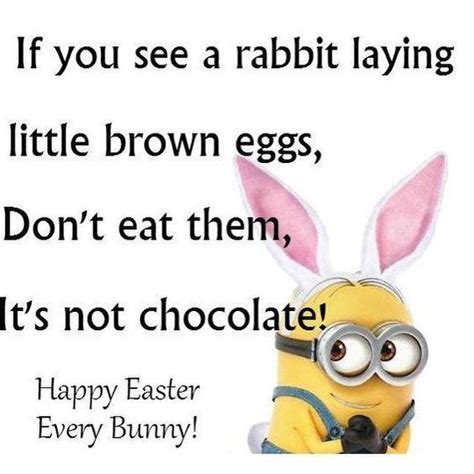 Chocolate Easter Bunny Meme - 25 best funny easter quotes on pinterest easter funny