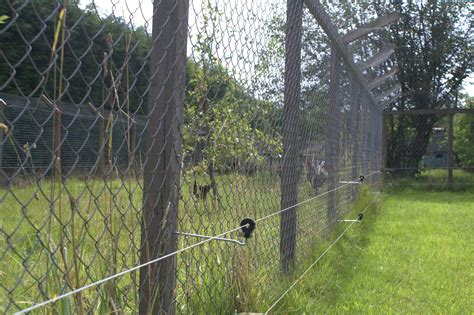 electric fences temporary and permanent poultry electric fencing efd electric fencing direct