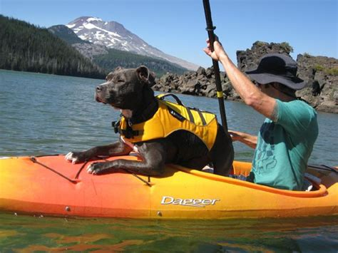 canoeing with dogs kayaking with dogs 15 photos quot for the pitties quot
