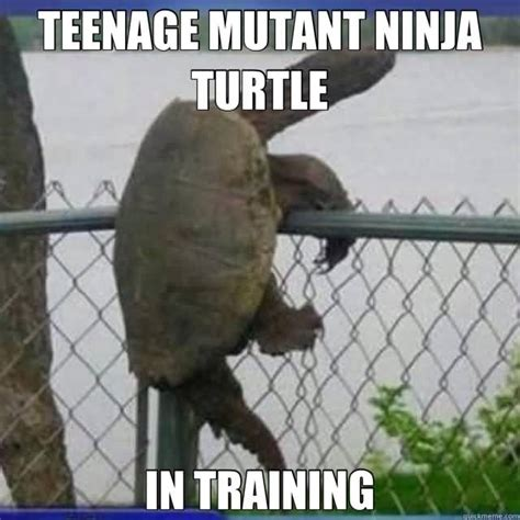 Ninja Turtles Meme - yo dawg i heard you were training your inner ninja meme