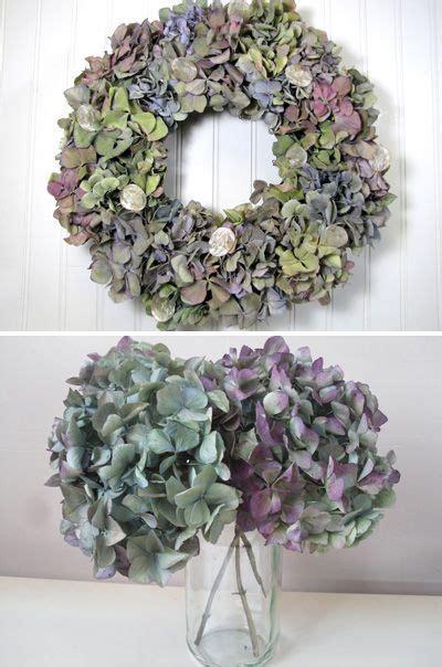 wie trockne ich hortensien hortensien trocknen auf 100 inspirierende