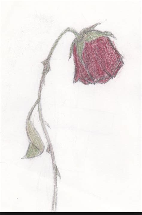 wilting rose tattoo wilting drawing at getdrawings free for