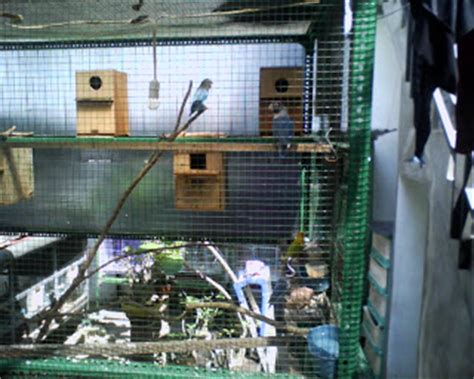 Tempat Makan Burung Koloni lovebird breeder kandangkoloni