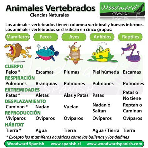 animales vertebrados mamiferos caracteristicas portal los animales vertebrados clasificaci 243 n y ejemplos