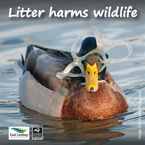 how to litter a litter harms animals pictures to pin on pinsdaddy