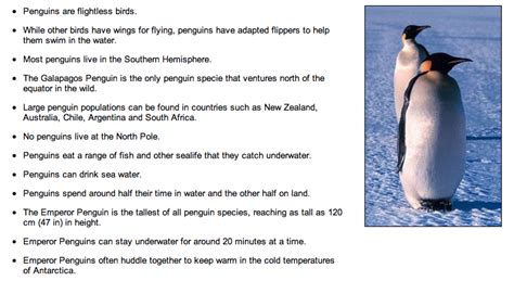 penguin facts for exciting facts about penguins facts about animals volume 18 books penguins ks1 topics resources teachingcave