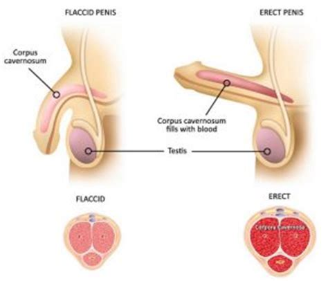 how to a penis exercises against erectile dysfunction erectile dysfunction protocol review can jason long help