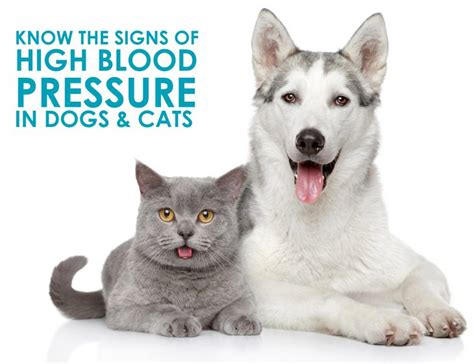 high blood pressure in dogs high blood pressure in dogs and cats what you must allivet pet care